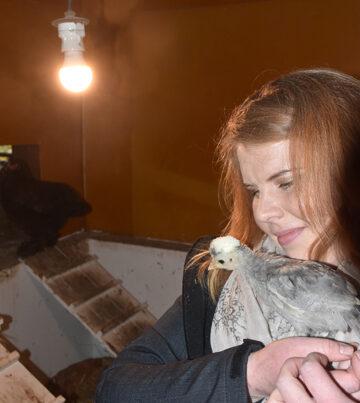 Miia Peltonen ja nuori Hollannin valkohuntu, aikuisena komea ilmestys. Yllätykseksi jää, mitkä Peltosen eläimistä pääsevät tänään reissuun.